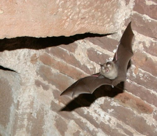 Bats invade Utah courthouse day before Halloween