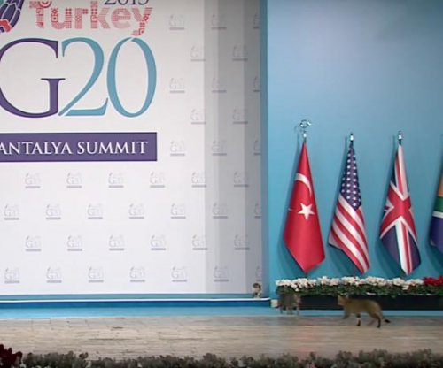 Stray cats crash Turkey's G20 summit