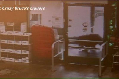 Bear walks into Connecticut liquor store