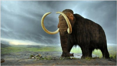 DNA yields clues to why mammoths went extinct in arctic regions