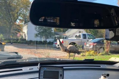 Police, owner chase loose emu in Massachusetts