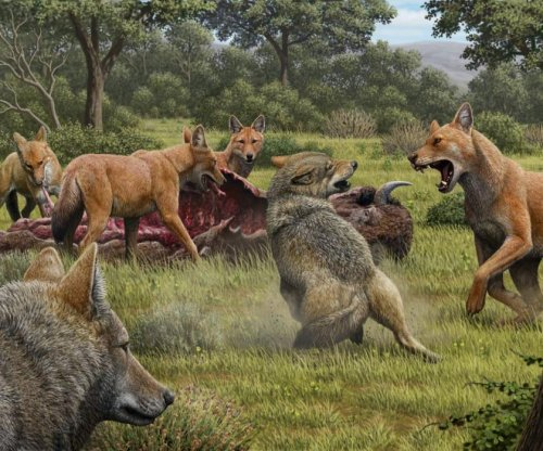 Study: Game of Thrones' dire wolves, gray wolves were different species