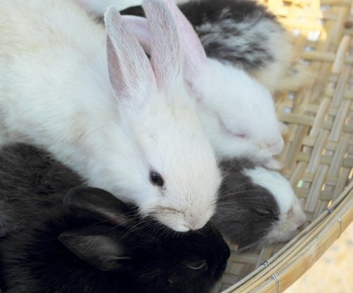 New York council votes to ban pet rabbit sales
