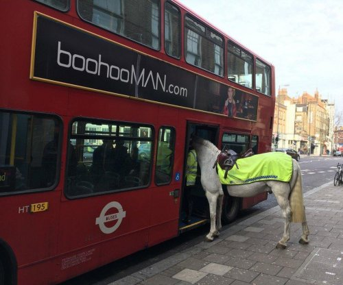 London politician spots horse 'boarding' bus