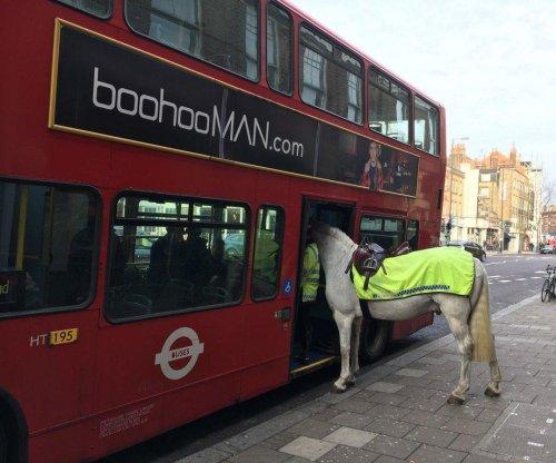 London politician spots horse 'boarding' bus