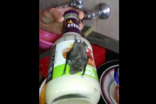 Napping bat found clinging to bottle of sauce in South Africa