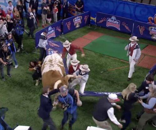 Texas' live bull mascot nearly tramples Georgia bulldog at Sugar Bowl