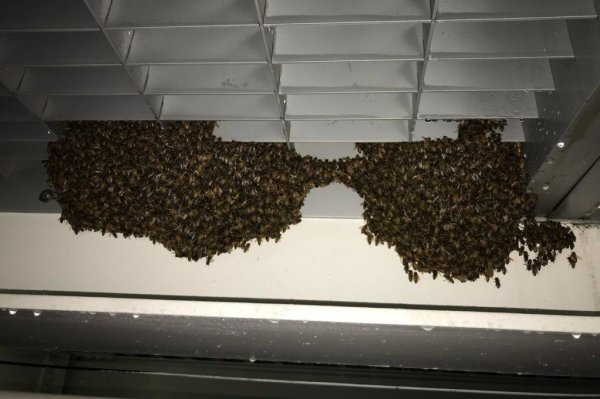 Look: Police remove 25,000 bees from Staten Island Ferry ...