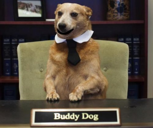 District attorney casts talking dogs in PSA about hot car dangers