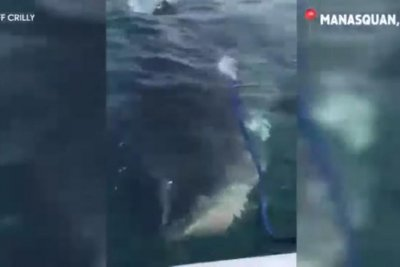 Fishermen film unexpected great white shark encounter in New Jersey