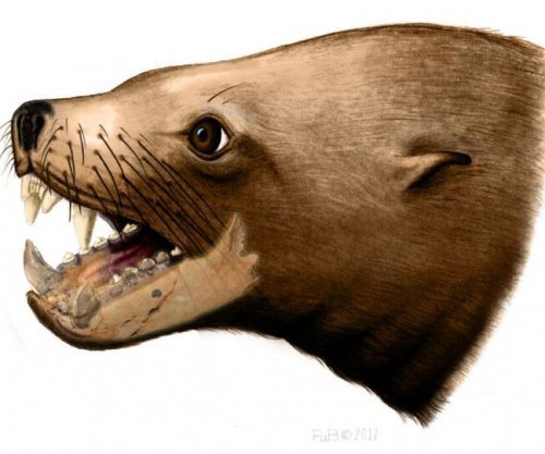 New research undermines 'killer walrus' theory