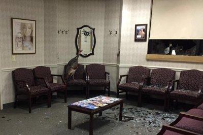 Turkey crashes through window of orthodontist's waiting room