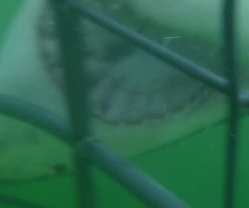 Divers record great white shark attacking cage bars