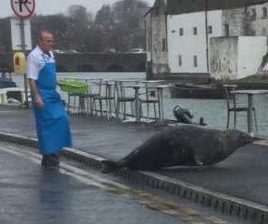 Tourist snaps photo of seal being chased from Irish fish shop