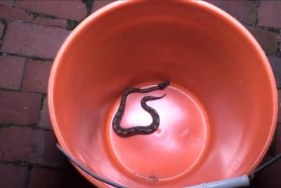 Massachusetts woman surprised by snake in her bathroom