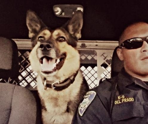 K-9 police dog returns to duty after inhaling meth
