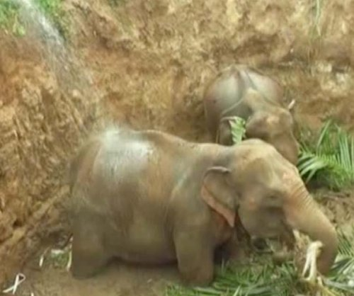 Baby elephants rescued from deep well in Sri Lanka