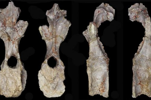 New species of stegosaur is oldest ever found