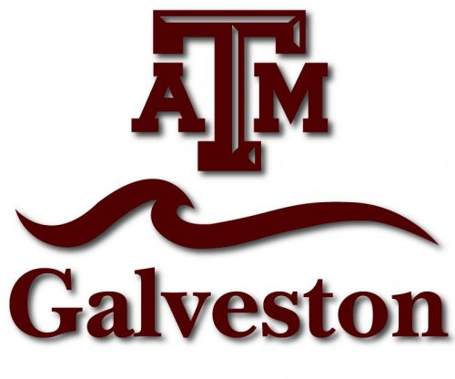 Texas A&M professor fails entire class for bad behavior