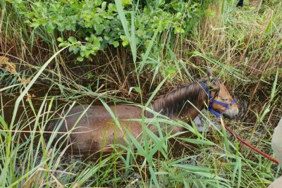 Look:-Pony-stuck-in-British-bog-lifted-to-safety