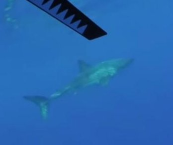 Great white shark circles Hawaii kayaker for more than an hour