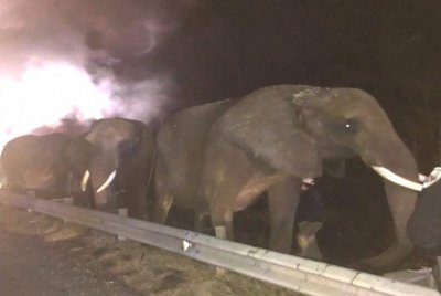 Truck carrying three African elephants catches fire in Tennessee