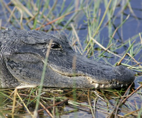 Texas man killed in apparent alligator attack