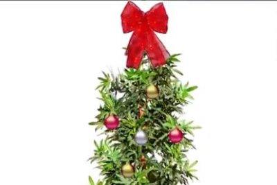watch marijuana leaf christmas tree pulled from walmart com upi com watch marijuana leaf christmas tree