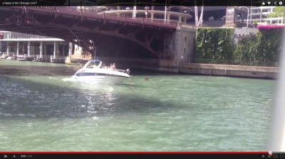 Video: Purported 'hippo' spotted in Chicago River