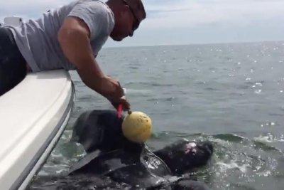 Florida police rescue 9-foot-long leatherback turtle
