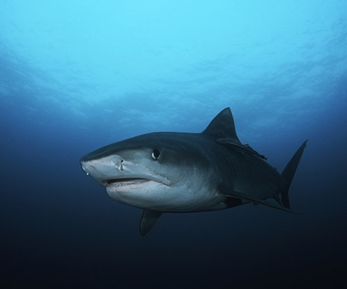 Swimmer bitten by shark off North Carolina shore