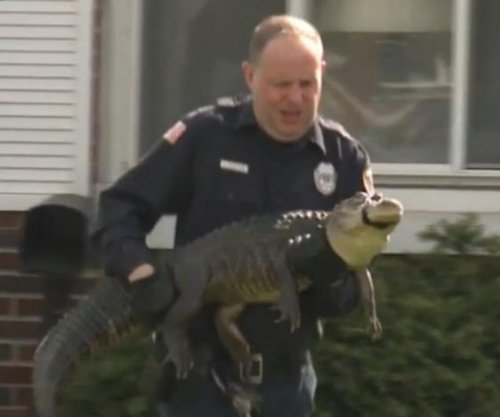 Venomous snake bite leads police to alligators in Wisconsin home