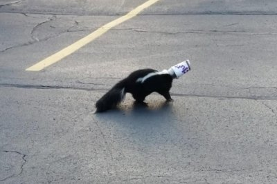 Skunk rescued from McFlurry cup in Chicago suburb