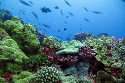 Fish census offers roadmap to recovery for damaged coral