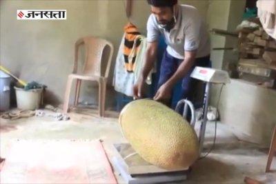 Family grows 113-pound jackfruit in back yard