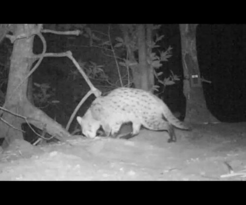 Fishing cat found in Cambodia after decade-long absence