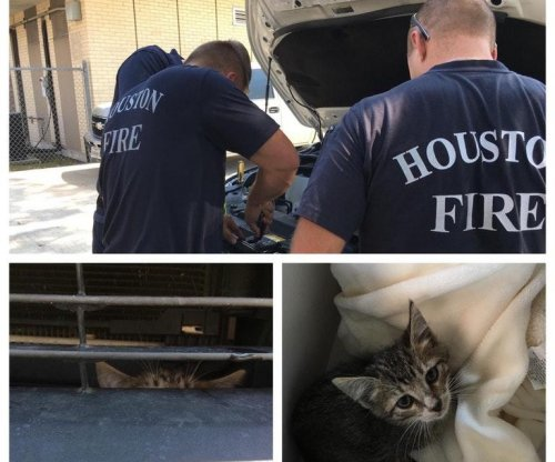 Firefighters rescue curious kitten trapped inside car engine