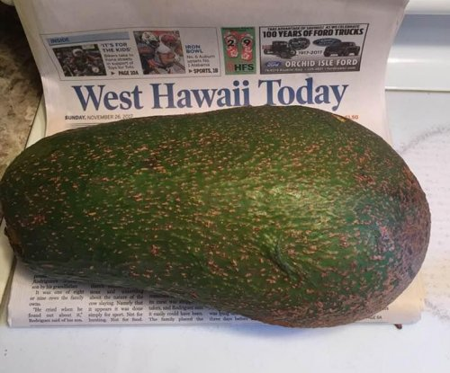 Massive 5-1/4 pound avocado could be world's heaviest