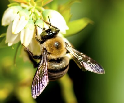 Bees have emotions: Good food puts them in a good mood