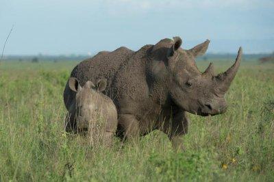 Scientists underestimate impact of global warming on wildlife