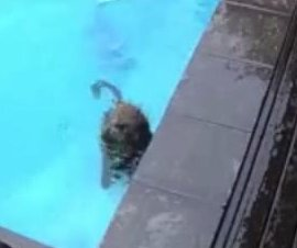 Family finds pool-crashing neighbors were baboons