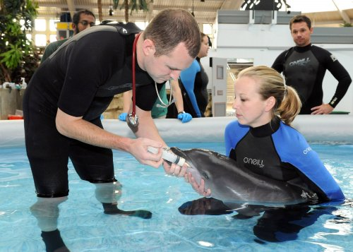 Baby dolphin rescued in Florida on America's birthday