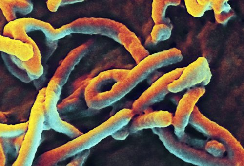 U.S. to send 3,000 military personnel to combat Ebola