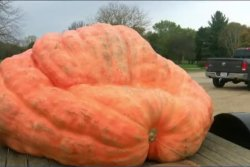 Tiny crack disqualifies pumpkin thought to be largest in U.S.