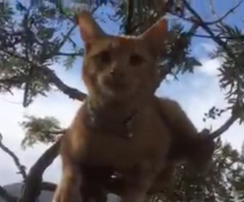 Woman uses crowdfunding campaign to rescue cat from tree