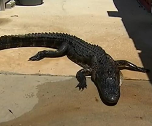 Girl, 10, pries open 9-foot alligator's mouth to free her leg