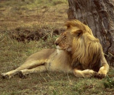 U.S. Fish and Wildlife can't find dentist who killed Cecil the lion