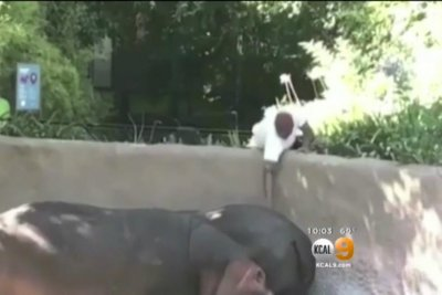 Police probe video of man spanking zoo hippo