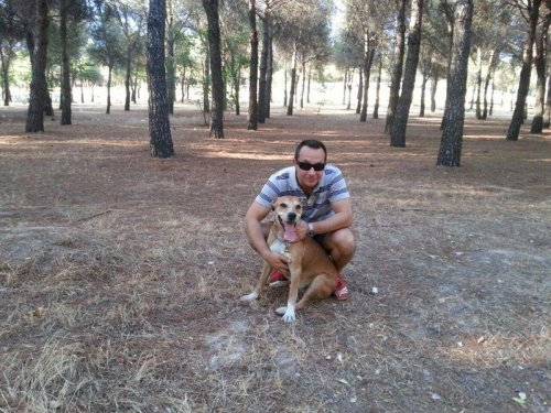 Ebola victim's pet dog to be euthanized in Spain
