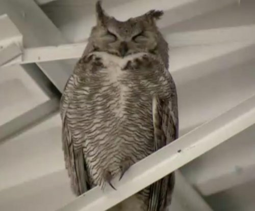 Owl family makes home in Lowes garden center